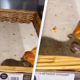 Sainsbury's Respond After Video Of Rats Crawling Over Croissants Goes Viral