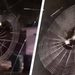Insane Video Shows Spider Weaving An Incredible Web