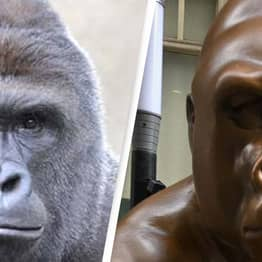 Harambe Honoured With 7-Foot Statue Surrounded By 10,000 Bananas