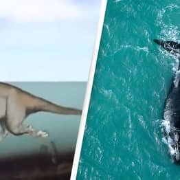 Incredible Video Shows The Evolution Of Whales Over Time