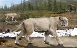 Scientists Discover Perfectly Preserved Extinct Cave Lion