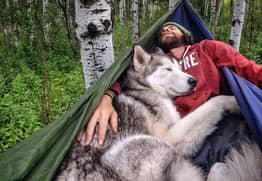 Meet Loki, The Wolfdog Who Travels The World With His Owner