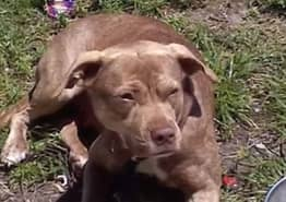 Hero Dog Saves Woman From Brutal Knife Attack By Violent Ex-Boyfriend