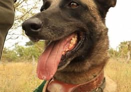Ricky Gervais Awards Brave Dog Medal For Helping Fight Against Poaching