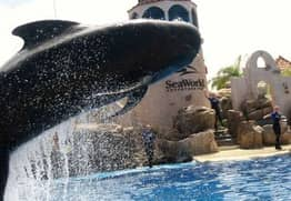 Death of 'Bubbles The Whale' At SeaWorld Sparks Outrage Online