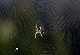 Thousands Of Spiders Spin Colossal Web To Give Us All Nightmares