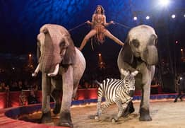 Wild Animals To Be Banned From Circuses By 2020