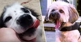 Couple Rescue Disabled Dogs And Give Them Wheelchairs