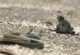 The Iguana Vs Snakes Scene From Planet Earth II Taught Us An Important Life Lesson