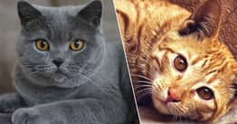 Cats Know Their Own Names Even If They Pretend Not To