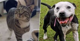 People Don't Want To Adopt Rescue Animals That Look Bad In Selfies