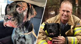 Dog Severely Burned In House Fire Adopted By Firefighter