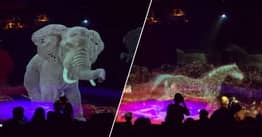 Circus Uses Holograms Instead Of Real Animals To Stop Animal Abuse