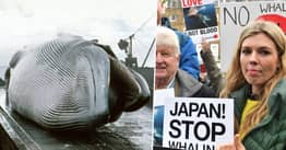 Japan To Resume Commercial Whaling Next Month After 30 Years