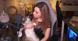 Twitch Streamer Apologises For Throwing Her Cat During Apex Stream
