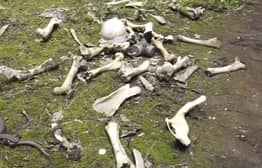 Guy Discovers Skeleton While Exploring Chernobyl Reactor