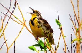 Nearly 3 Billion Birds Have Vanished Over The Past 50 Years In US And Canada