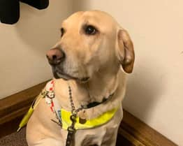 Guide Dog 'Rooted In Fear' Due To Fireworks Leaving Disabled Woman In Danger