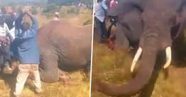 Elephant Hacked To Death By Villagers In Kenya