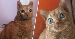 Potato The Cat's Unique Eyes Have Made Him An Internet Celebrity