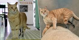 Bionic Cat Vito Becomes 'Superstar' With His Prosthetic Legs