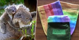 Volunteers Are Sewing Pouches For Australia's Orphaned Kangaroos And Koalas