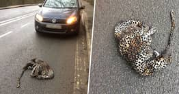 Dad Left In Stitches Pulling Over To Help 'Injured Leopard' That Turned Out To Be Onesie