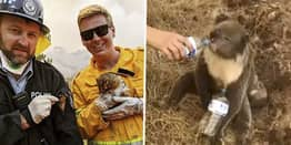 Australian Vets Forced To Mass Euthanise Suffering Animals Burnt In Bushfires