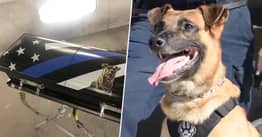 Utah Police Dog Hondo Killed In Line Of Duty To Be Buried In Special Coffin Bearing His Portrait