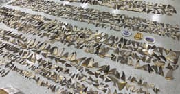 1,400 Pounds Of Shark Fins Seized At Miami Port