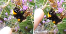 Bee 'High-Fiving' Man Who Films Encounter Isn't Nearly As Cute As It Seems