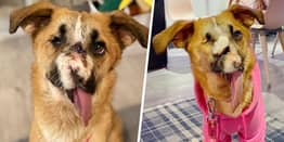 Dog Who Survived Being Shot In Face Wins Viewers' Hearts On Morning TV