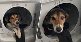 Woman's Day Saved By Accidental Text Of Dog Chilling In Tumble Dryer