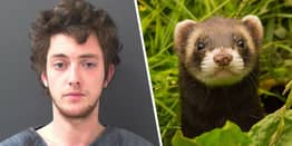 North Yorkshire Man Jailed For Throwing Box Of Ferrets At Passing Cars While Drunk