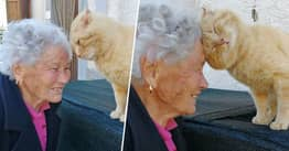 Italian Woman Reunites With Cat Nearly Four Years After It Went Missing During Earthquake