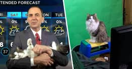 Weatherman's Needy Cat Interrupts Broadcast As He Works From Home