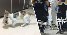 Stray Mama Cat Carries Her Sick Kitten To Istanbul Hospital So Medics Can Help
