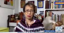 Philippines Reporter Tries To Stay Calm On Live TV As Her Cats Fight In Background