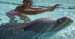 Tourists Urged To Swim With Robot Dolphins To Save Real Animals From Captivity