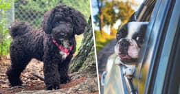 Missing Dog That Jumped From Car Window Found 500 Miles Away In Miami