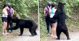Wild Bear Caught Sniffing Woman's Hair Has Been Caught And Castrated