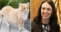 Mittens The Cat Battles Jacinda Ardern For New Zealander Of The Year
