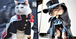 Japanese Guy Creates Intricate Anime Costumes For His Cats