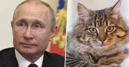 Russia Says It's Developing Coronavirus Vaccine For Cats