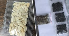 Mystery Seeds Sent From China Identified As Harmless Cooking Seeds