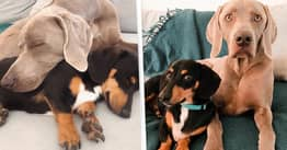 Dog Overcomes Crippling Anxiety With His Own Emotional Support Dog