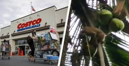 Costco Will No Longer Sell Coconut Milk Made With Forced Monkey Labour