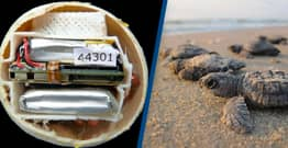 Breaking Bad Inspires Breakthrough In Tracking Turtle Poachers