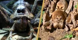 Man Finds Terrifying Spider That Looks Exactly Like Aragog From Harry Potter