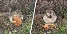 Chubby Squirrel Spotted Eating Cheeseburger Near McDonald's